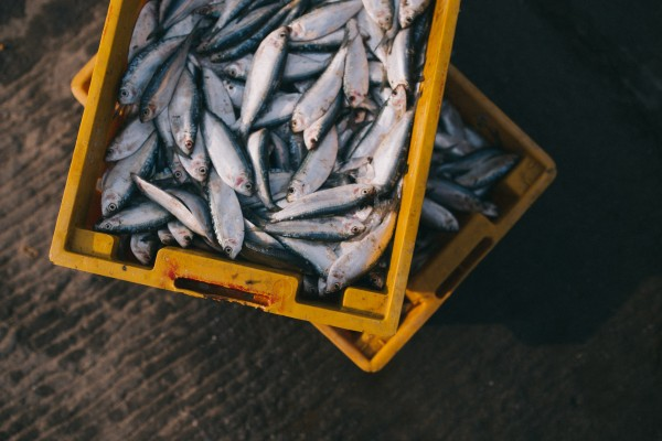Fish Suppliers / Retailers